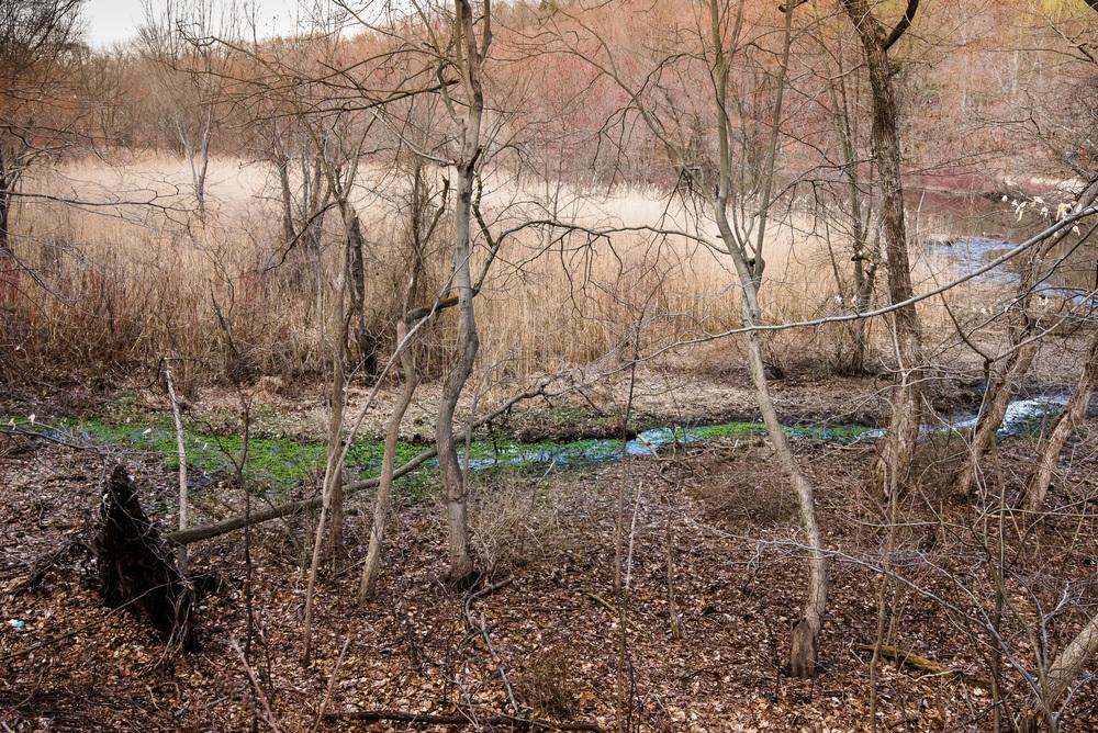 Green Stream.jpg