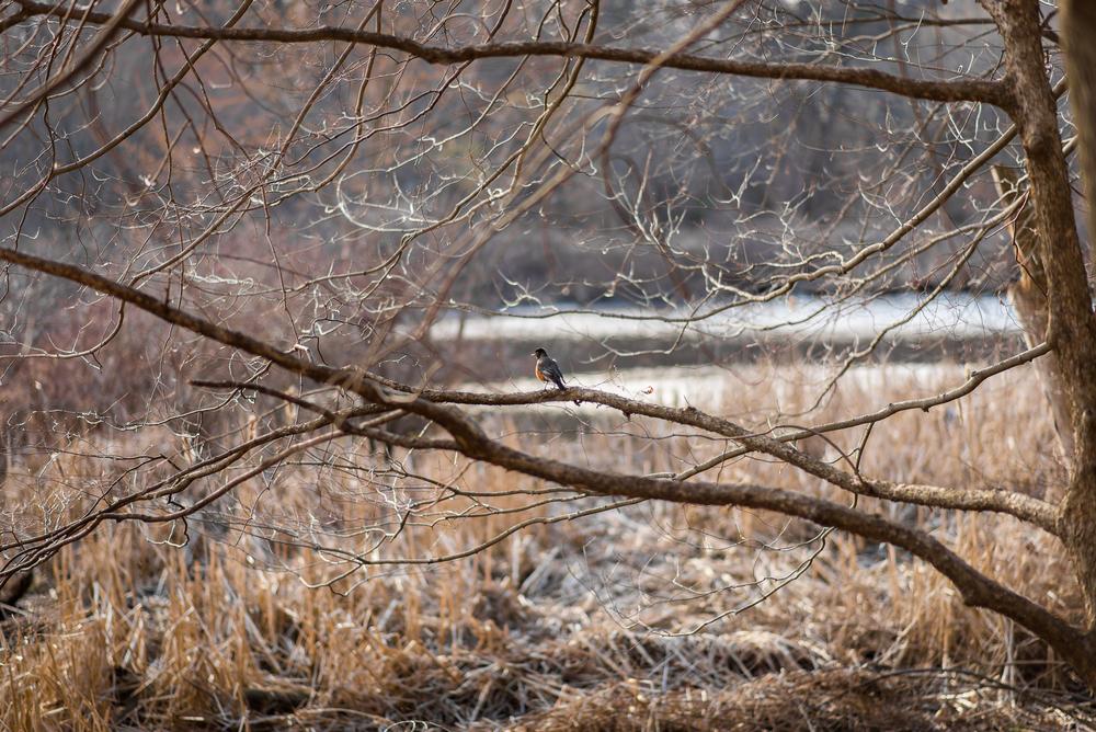 Robin Spring Lookout.jpg