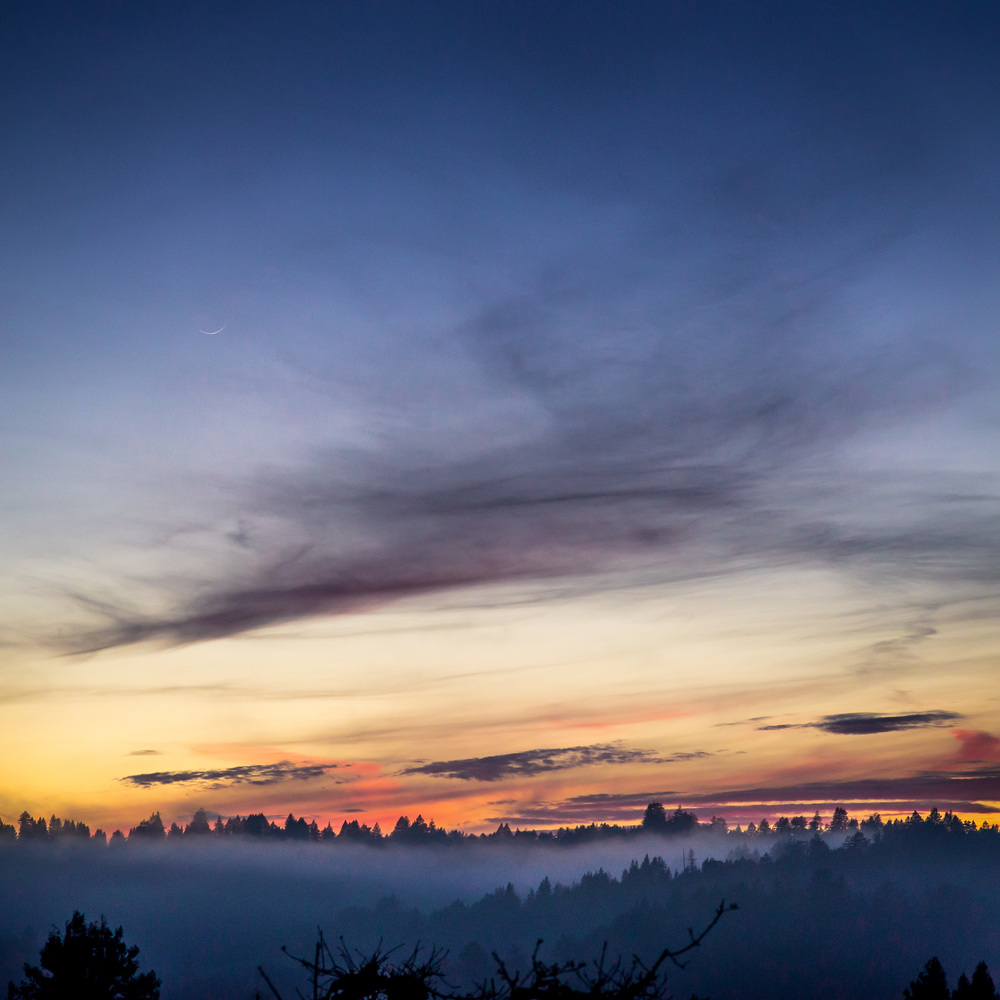 Sunset Foggy Trees v2.jpg