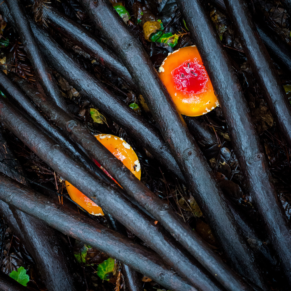 Mushrooms through branches-2.jpg