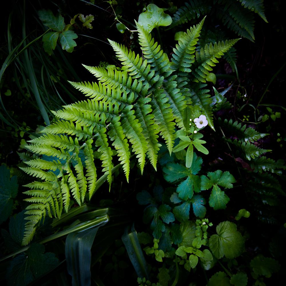 Mixed Flora-2.jpg