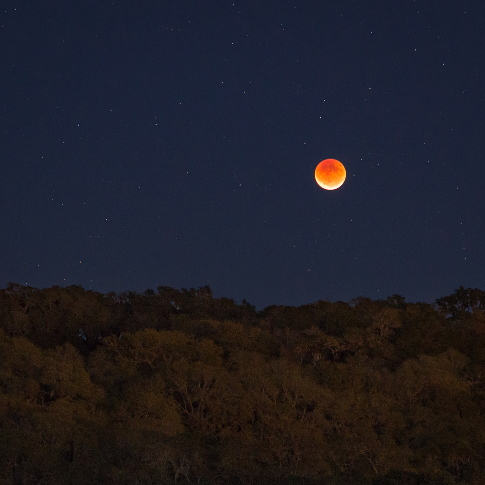 Red Moon Foothill Park Closeup.jpg