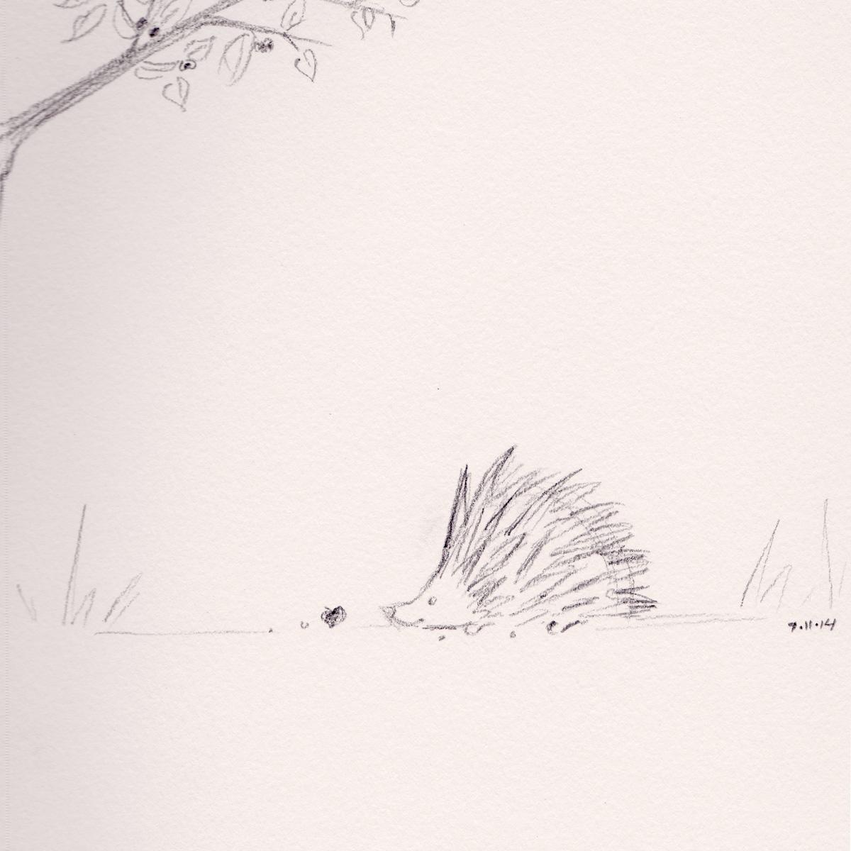 hedgehog_web