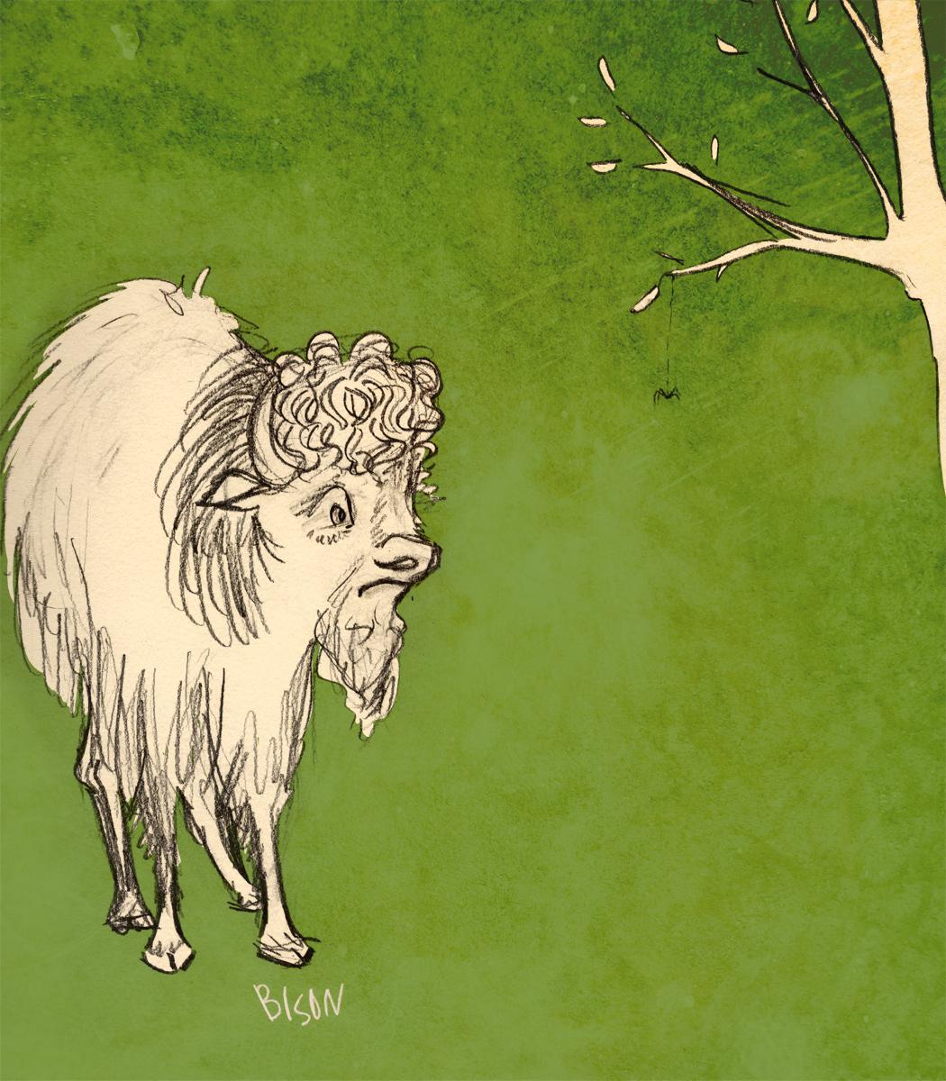 bison_9_3_web