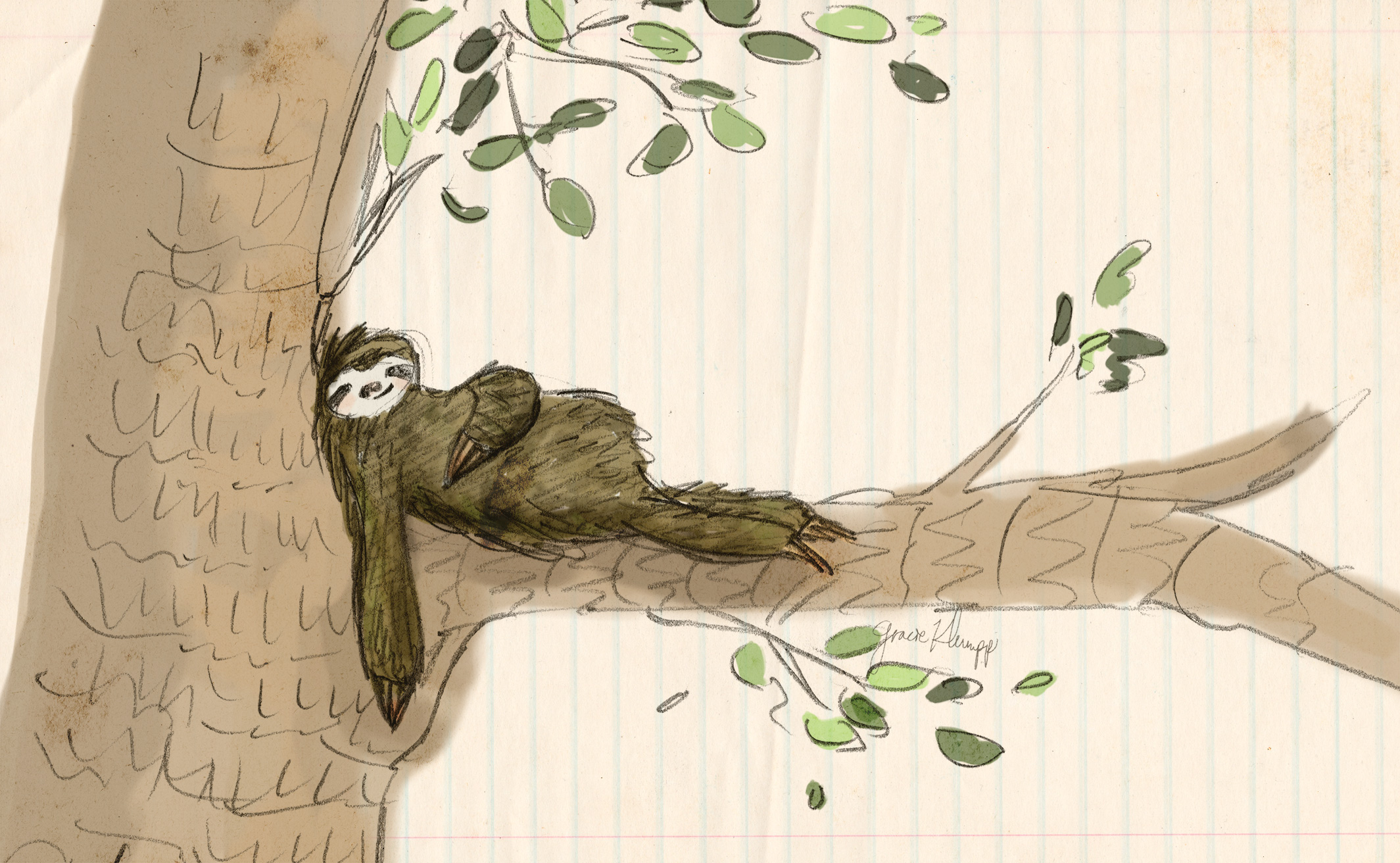 gracie-klumpp-illustration-sloth