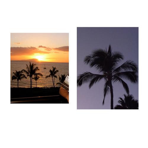 PALM PICS.jpg