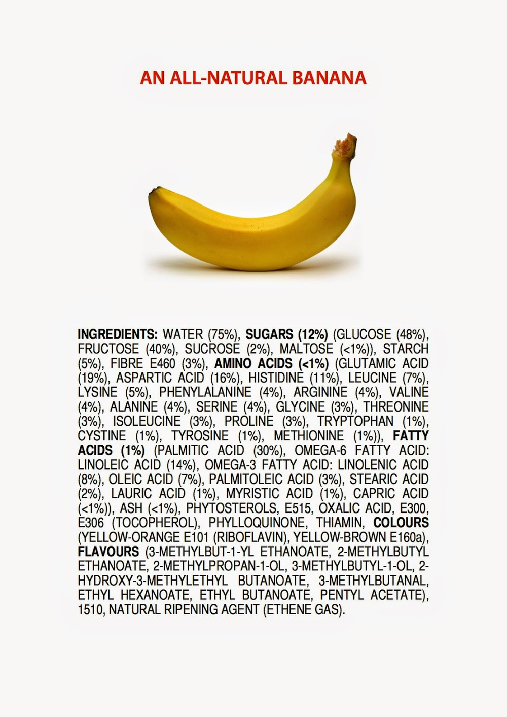 ingredients-of-a-banana-poster-4.jpeg