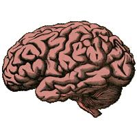 brain inflammation psychiatric disorder