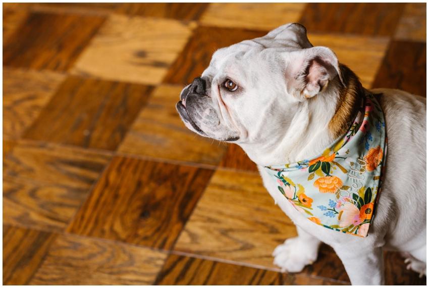 rover-boutique-dog-bandana-rifle-fabric-urban-row-photo_0010.jpg