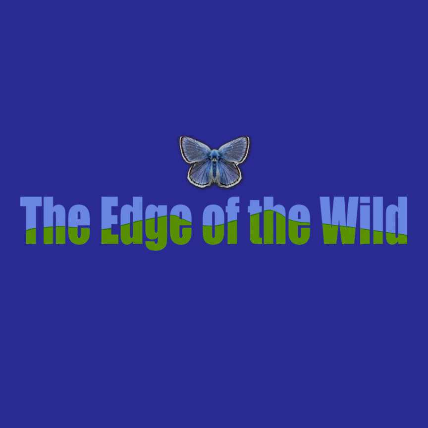 The Edge of the Wild Documentary Film - Gail Mallimson produced this award-winning feature documentary in 2015. In addition to making the film, she designed and promoted a website and an outreach program for nonprofits wishing to show the film. The film was also used to raise awareness and develop support for the Endangered Species Act.