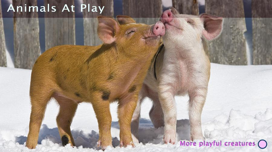 carouselfeb_animalplay.jpg