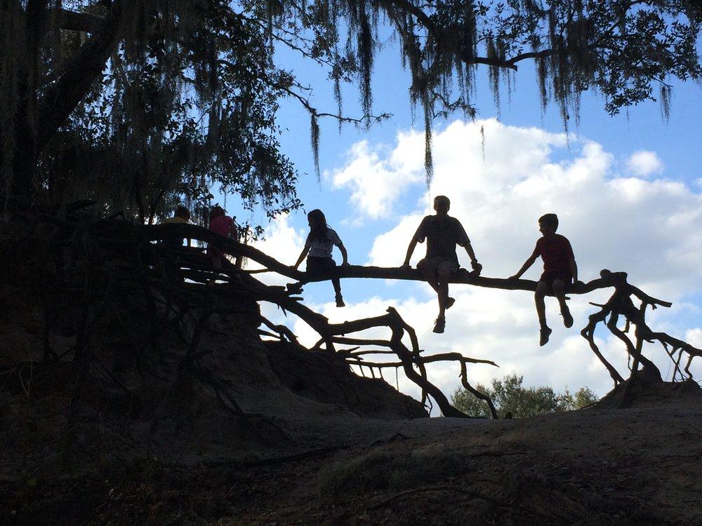kids_in_tree_web
