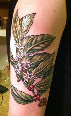 coffee plant tattoo 2