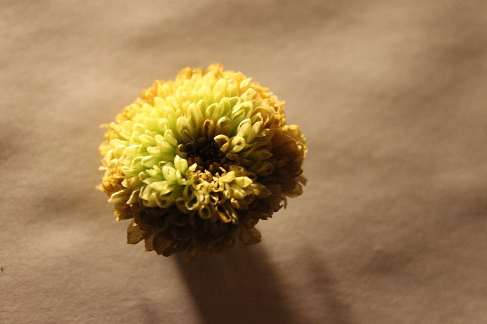 Buenavista Floral