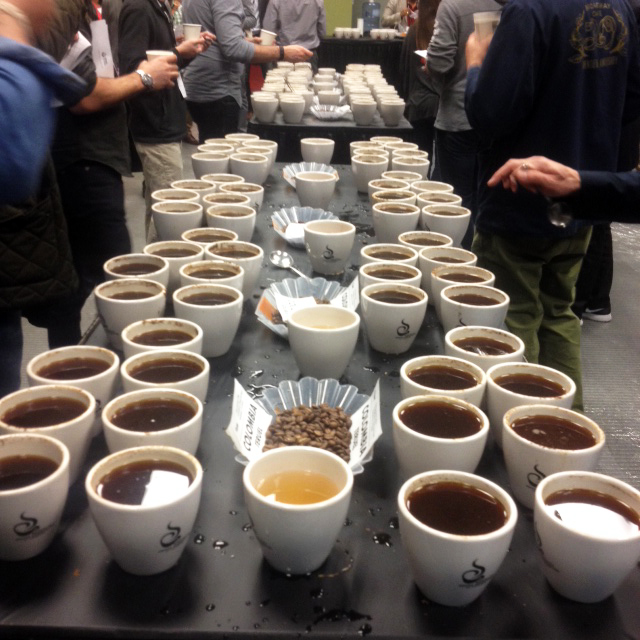 An enormous lineup of coffees at a cupping with Olam Coffee