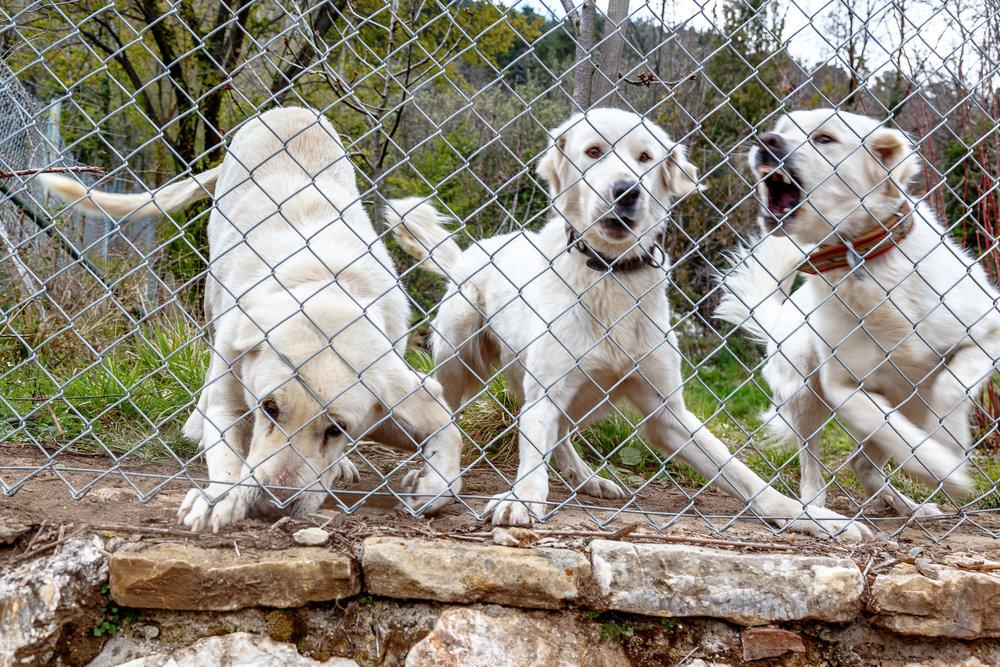 dog boundaries.jpeg