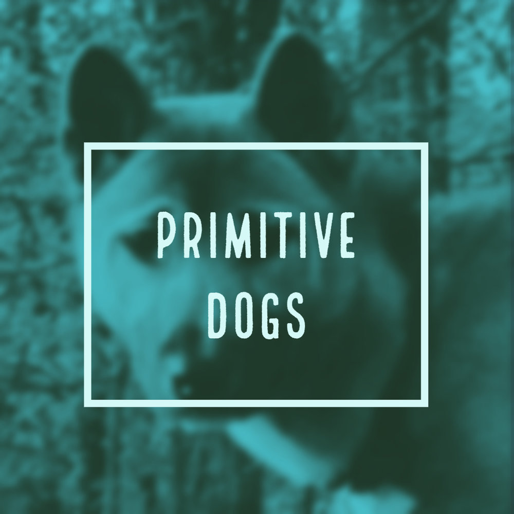 Primitive dogs.jpg