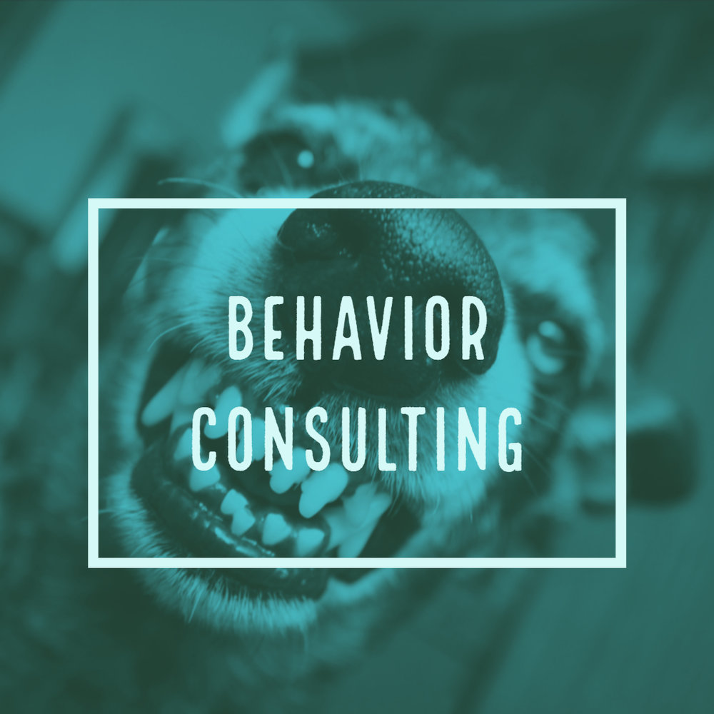 BehaviorConsulting.jpg