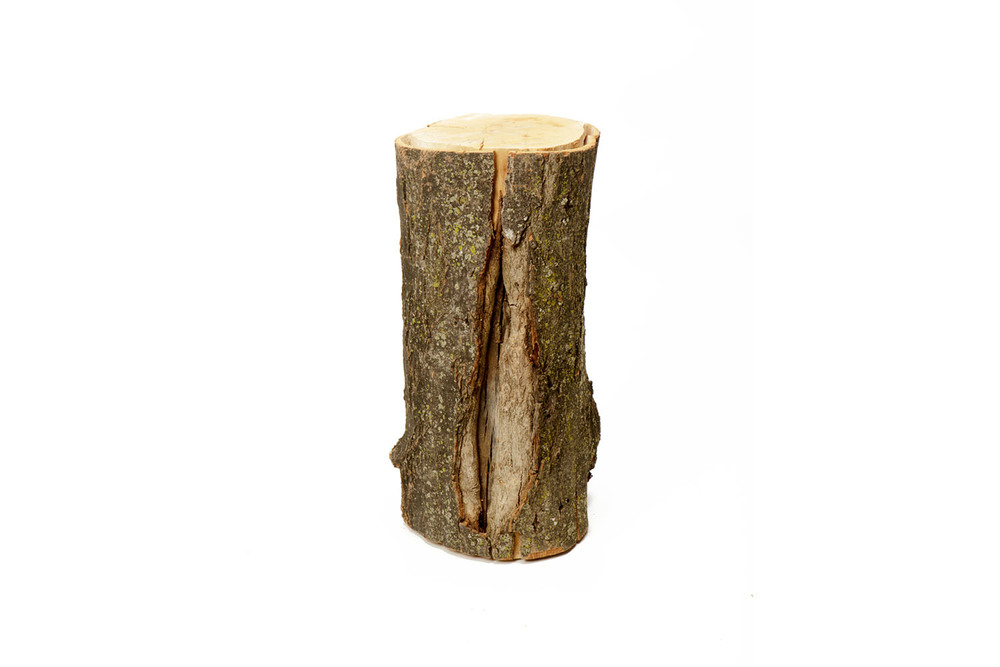 Tree Stump 6-