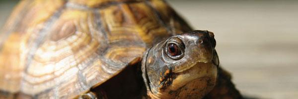 Turtle exploring