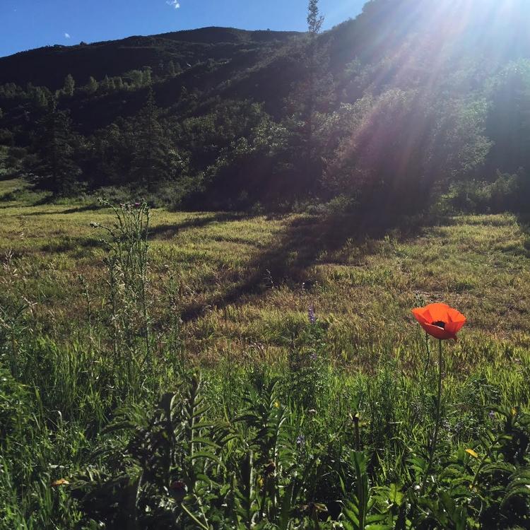 aspen field