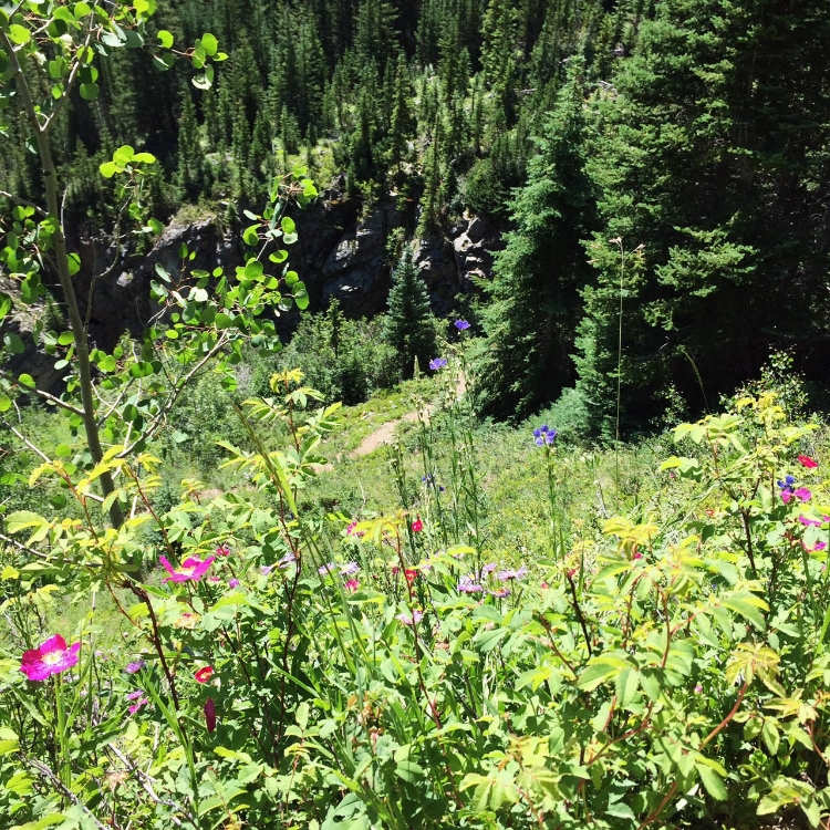 aspen hike