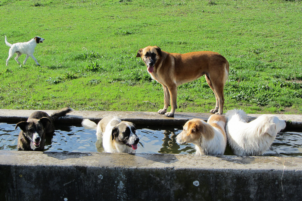 dogs-in-trough.jpg