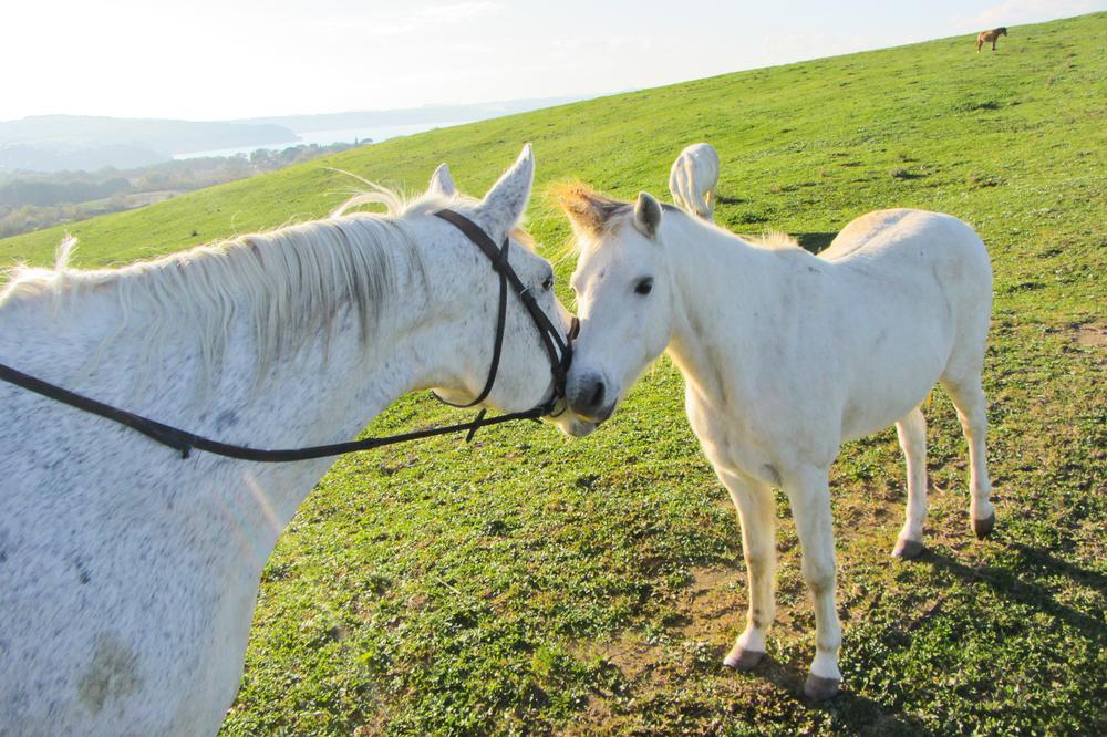 horses-kissing.jpg