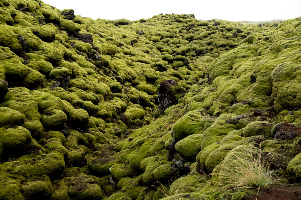 There were acres of lava rock covered with moss