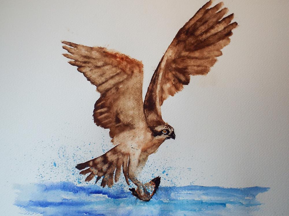 Osprey I