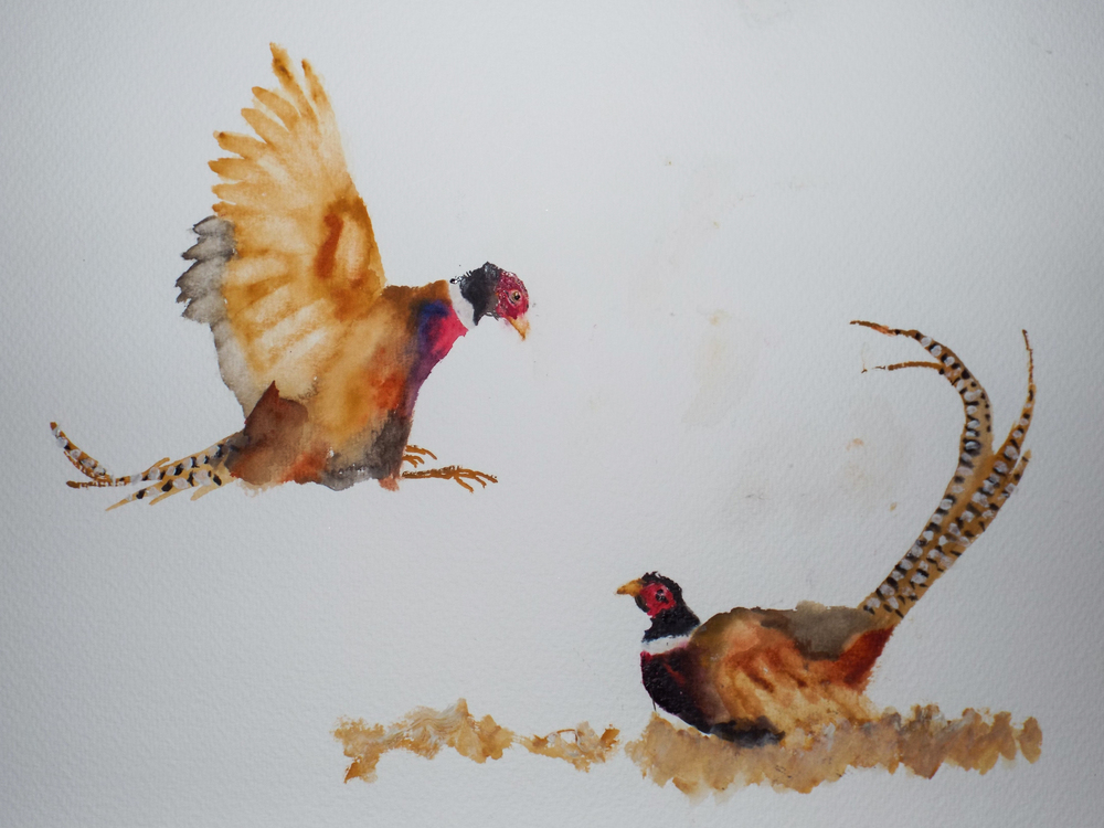 Fighting Male Pheasants IV