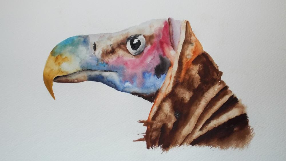 African Vulture II