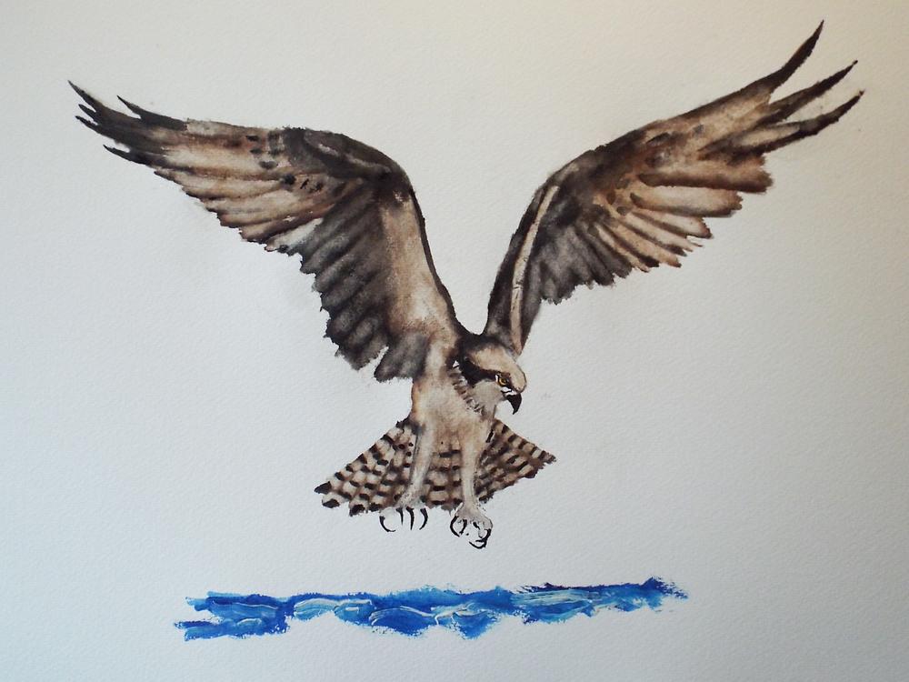 Osprey II