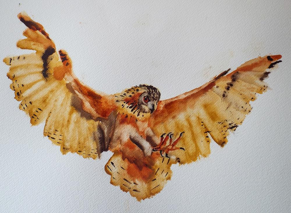 Eagle Owl I