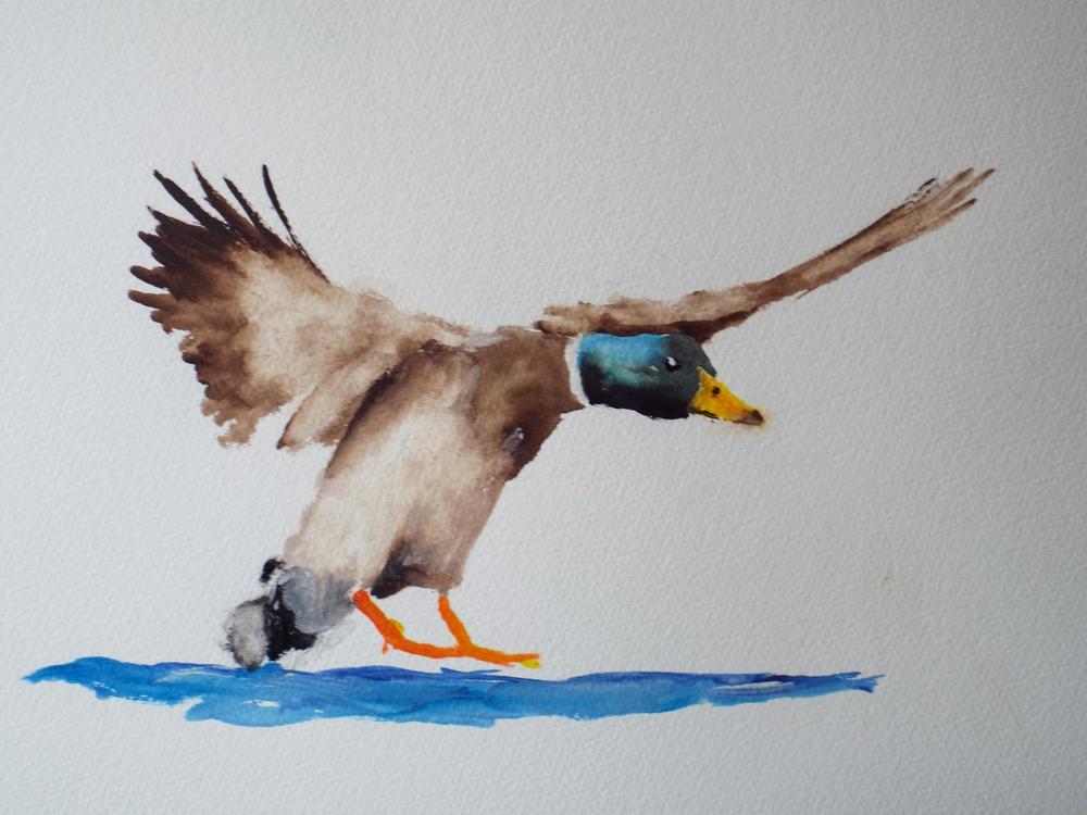Duck Landing III