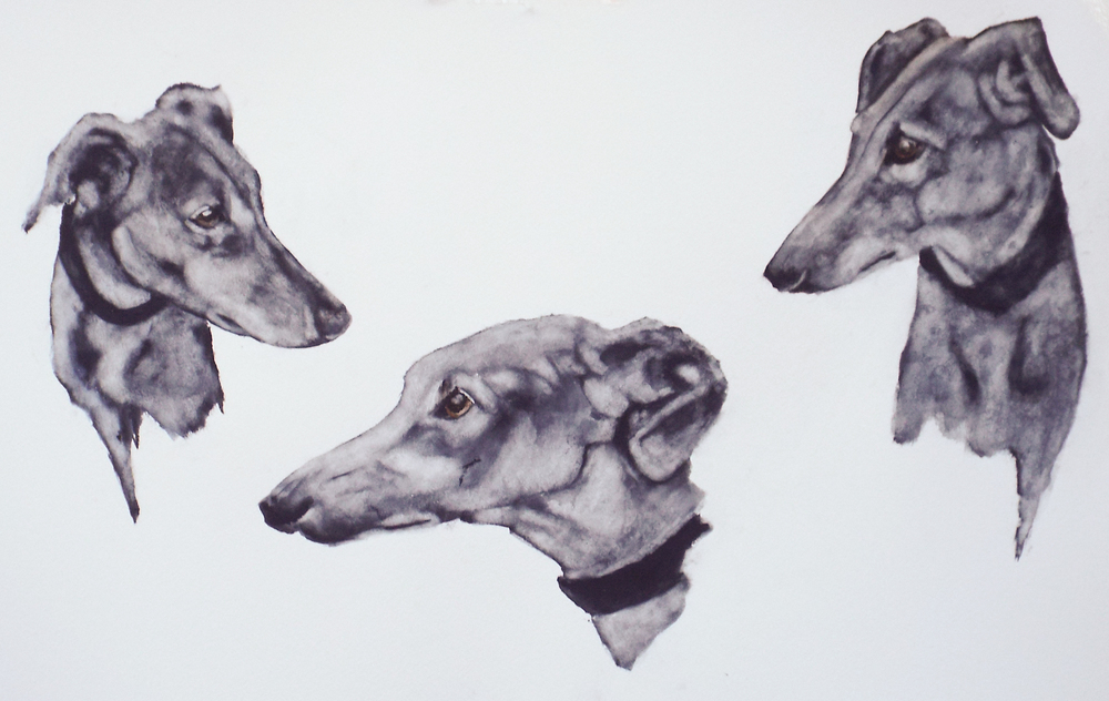 Studies of Lurcher