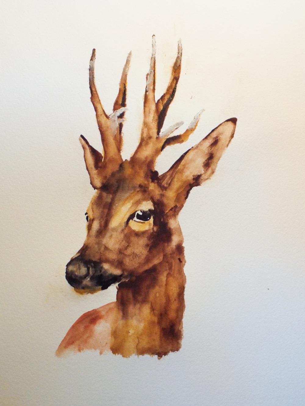 Roe Deer III
