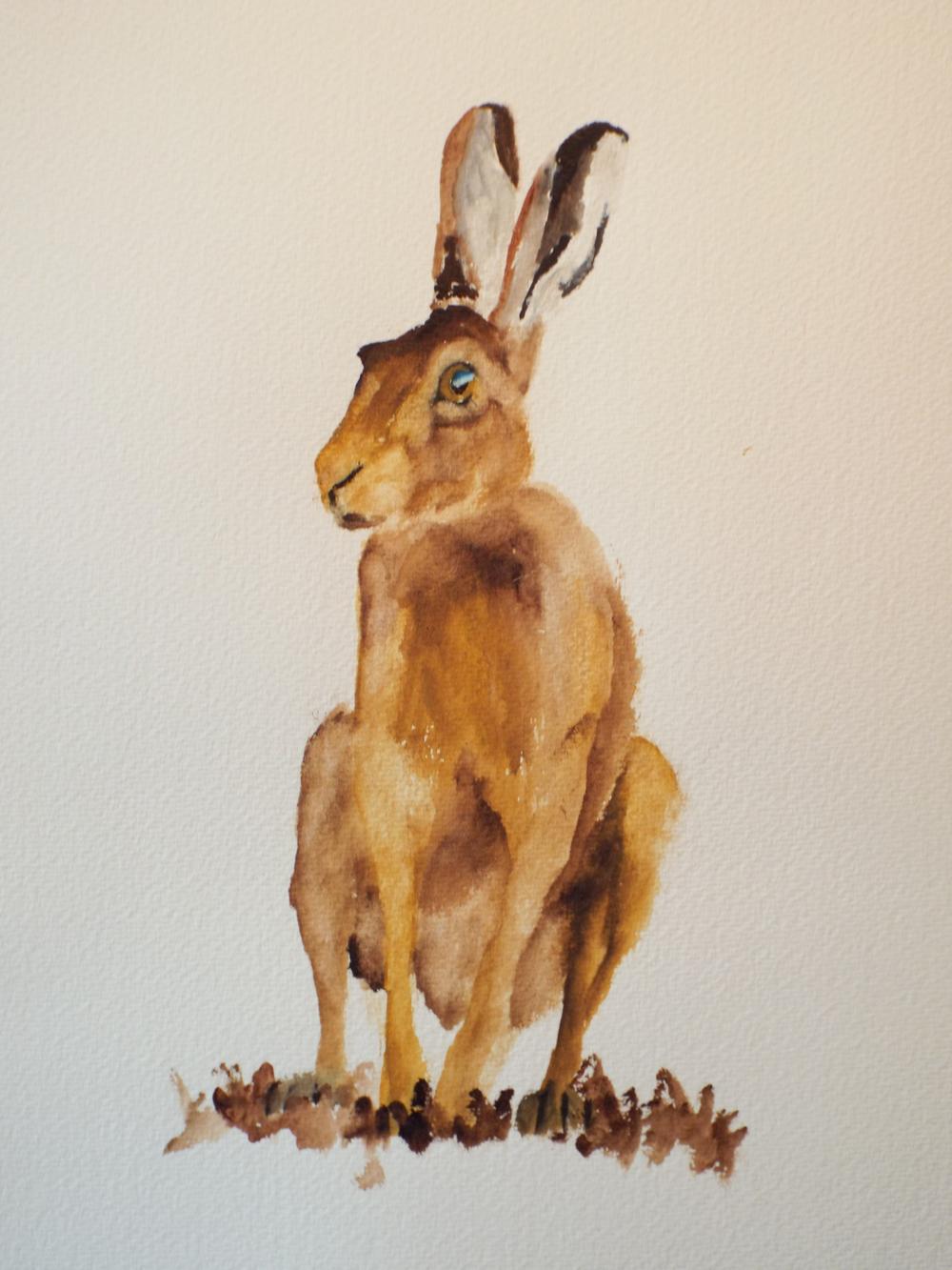 Hare VII
