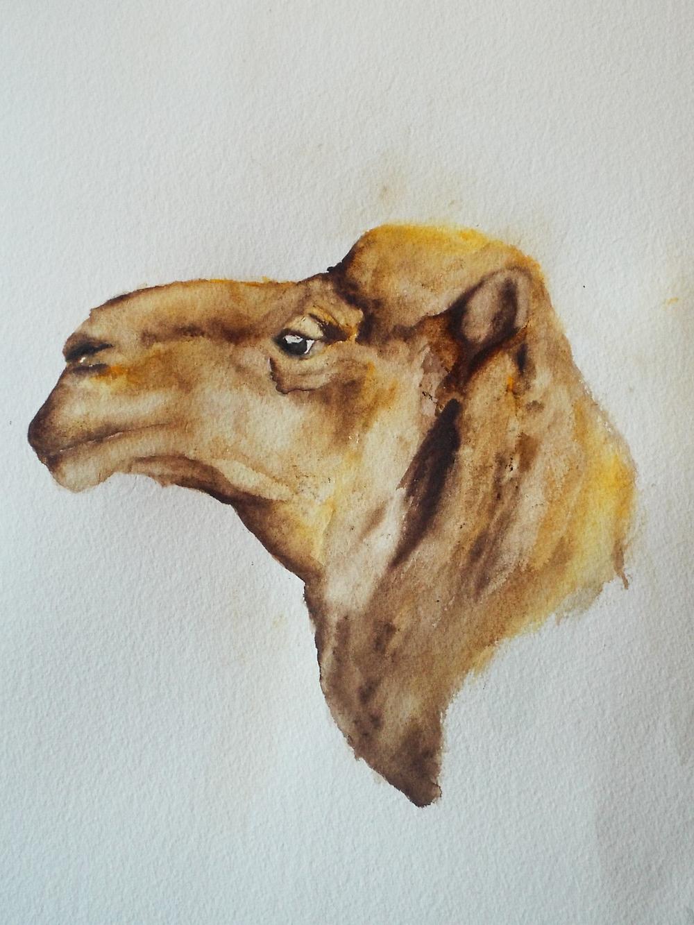 Camel II
