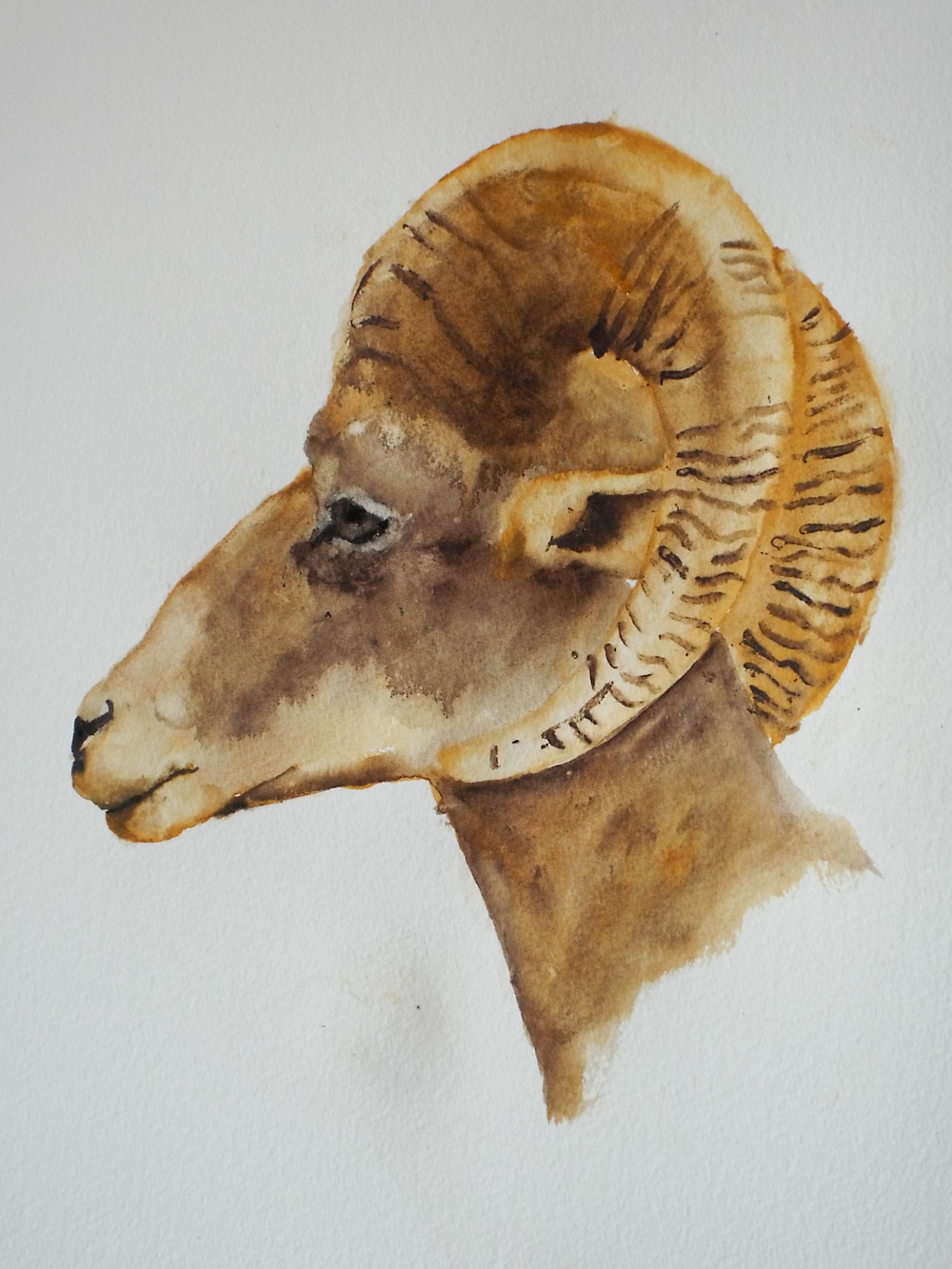 Ram VI