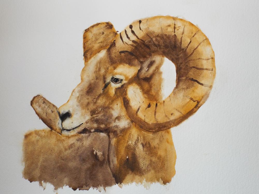 Ram II