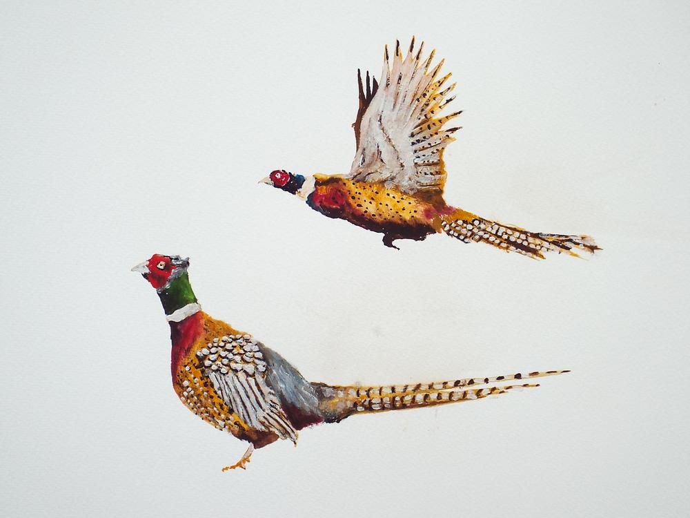Pheasants IV