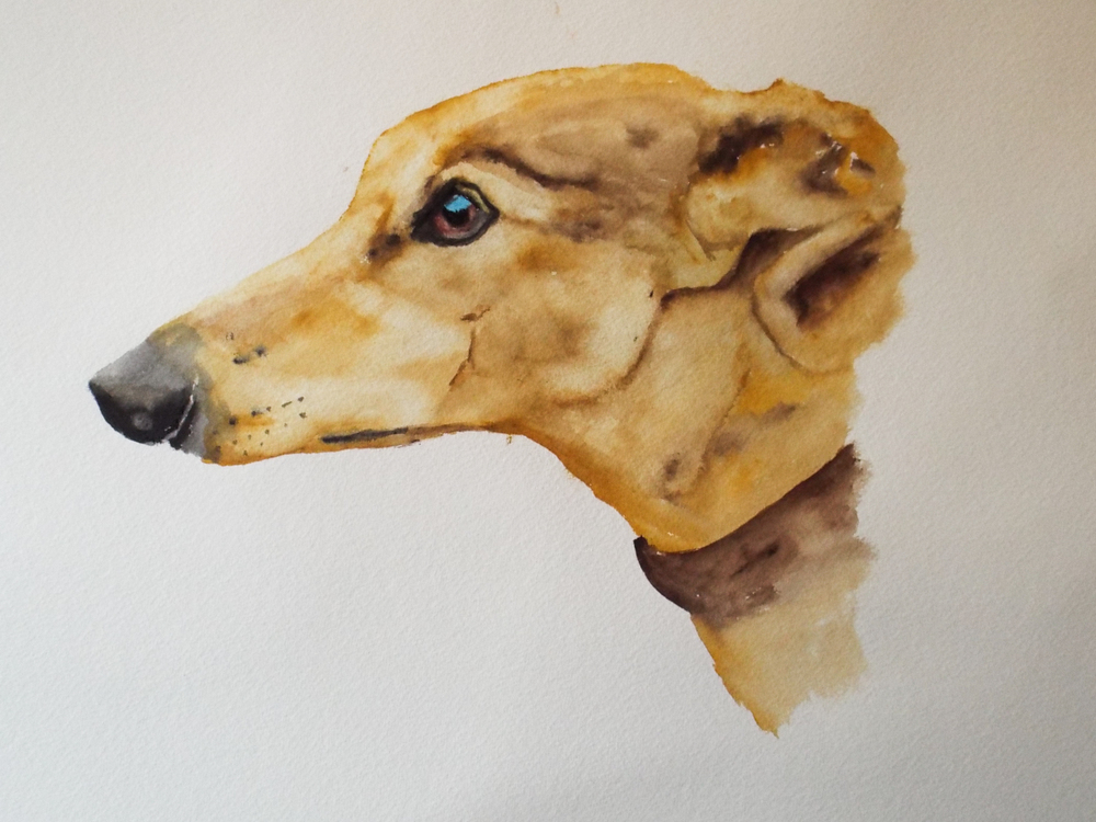 Head Of Lurcher