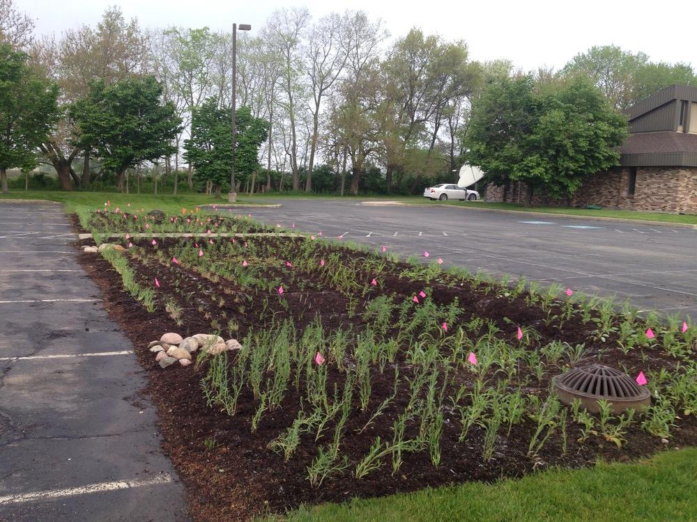 rain garden dry.jpg