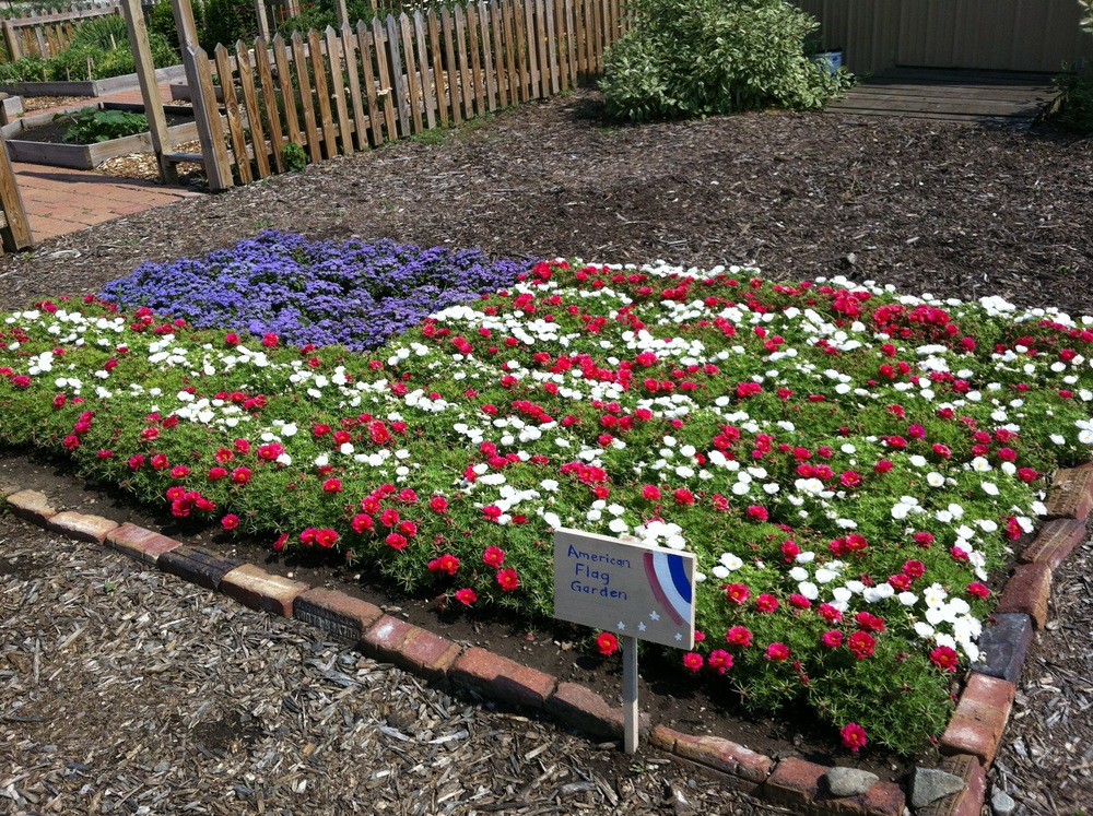 American Flag Flower Garden Master Gardener Association of