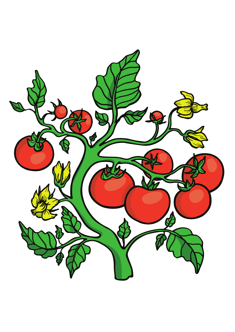 tomato_clipart.png