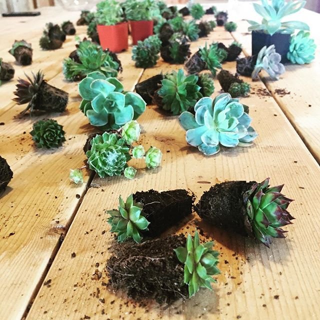 Happy Earth Day! In Westport, MA this afternoon with @weatherlow_florals for a succulent gardens workshop. #terrarium #growing