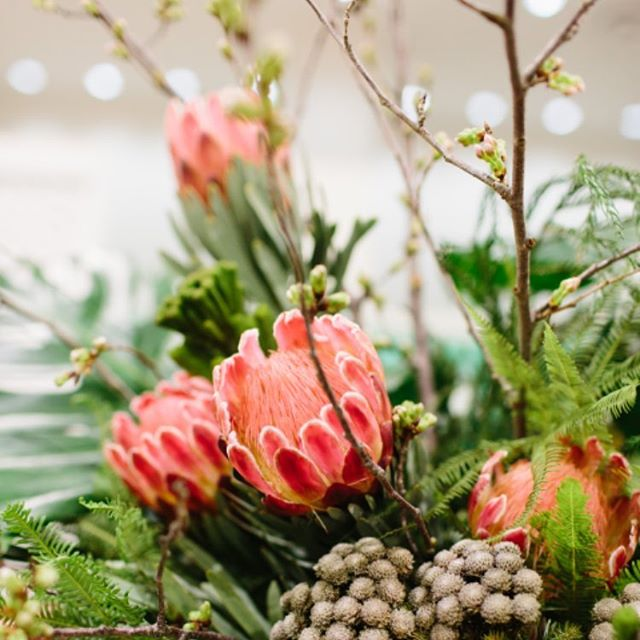 Oversized #protea!  Looking bright & tropical on this gray day. Design by @ddel4. 📷: @erinmcginn