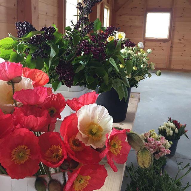 Pre-workshop: flowers are awaiting class participants @weatherlow_florals. #mothersday #celebration #fieldtovase #springblooms