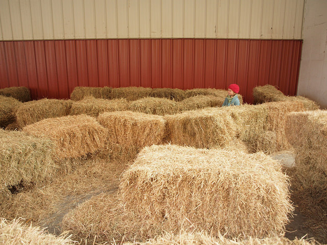 Little kid, big maze.
